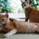 Esters katter