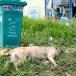 Hund vid vägkanten