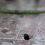 Oidentifierat föremål på altangolvet